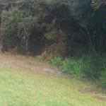 Snakes in the bush